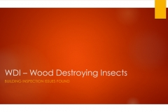 Wood-Destroying-Insects-1